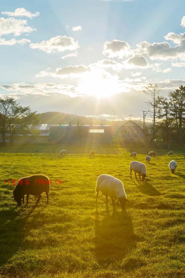 超治愈牧场写真:愿你被这世界温柔相待 ,超治愈牧场写真:愿你被这世界温柔相待 牧场 拍摄 林美纪 平林美纪 作品 新西兰 我会 照片 摄影 第11张,牧场,拍摄,林美纪,平林美纪,作品,新西兰,我会,照片,摄影,第11张