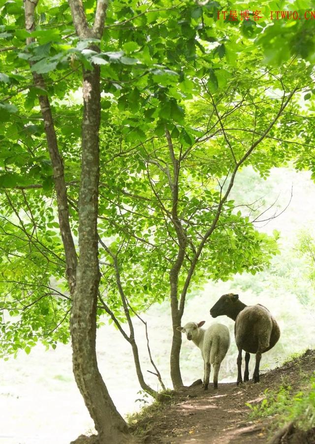 超治愈牧场写真:愿你被这世界温柔相待 ,超治愈牧场写真:愿你被这世界温柔相待 牧场 拍摄 林美纪 平林美纪 作品 新西兰 我会 照片 摄影 第12张,牧场,拍摄,林美纪,平林美纪,作品,新西兰,我会,照片,摄影,第12张